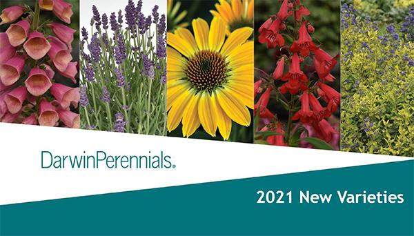 New Varieties 2021 from Darwin Perennials