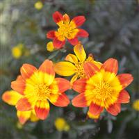 Bee Happy Bidens