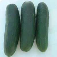 Marketmore Select Cucumber