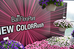 ColorRush at Spring Trials