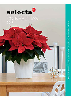 207 Selecta Poinsettias