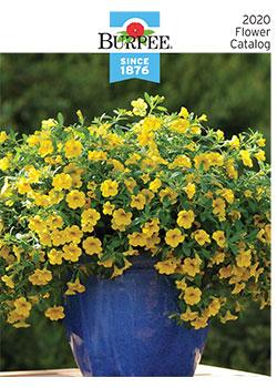 2020 Burpee Flower
