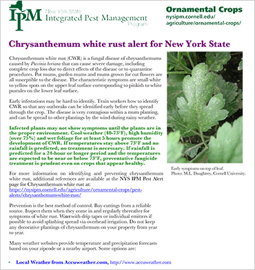 Chrysanthemum White Rust Alert & Management