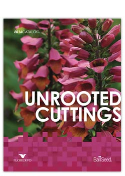 2016 Darwin Perennials Unrooted Cutting